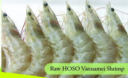 Raw HOSO Vannamei Shrimp